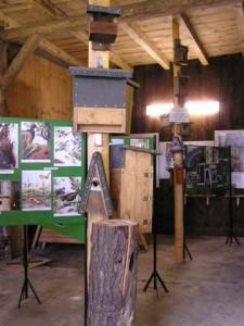 dauerausstellung-natur-artenschutz-3