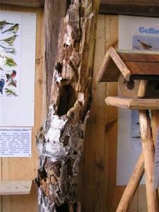 dauerausstellung-natur-artenschutz-4